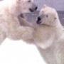 M-bears