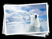 PolarAdventure