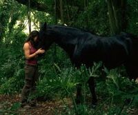 Kate horse
