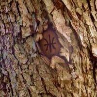 Baummarkierung2