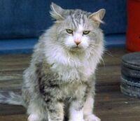 Nadia Cat