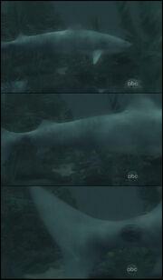 Shark 6x01