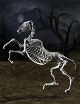 DAZ Productions - Skeleton Horse
