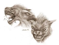 http://fc02.deviantart.net/images3/i/2004/11/c/e/LOTR_Wargs___Pencil_Study
