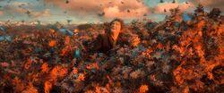 Bilbo & Butterflies