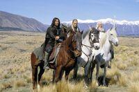 Pferde 13 schattenf 479441p