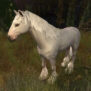 The Lord of the Rings Online - Shadowfax