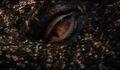 The-Hobbit-Smaug-Eye
