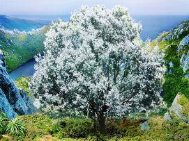 Біле Дерево Нуменору