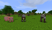 Shire - Cows - Pigs