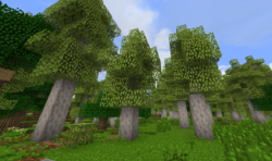 AspenForest