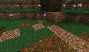 Barren Dirt - Old Forest B28