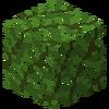 LeavesPalm