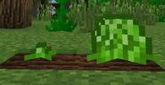 LettucePlant