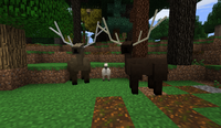 Elk love - Woodland-Realm B28