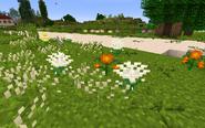 VariousChrys