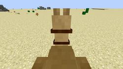 Camelriding
