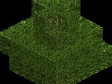 Vanilla Trees