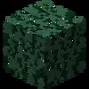 LeavesSpruce