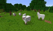 Sheep in the Shire B27