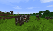 Cows in the Shire B27