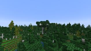 Dense birch forest