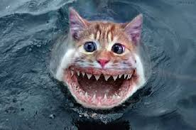 ScaryCatfish