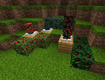 BerryStacks