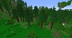 Auenland Waldgebiet