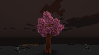 Mordor Cherry Tree B24