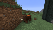 Boar-saddled