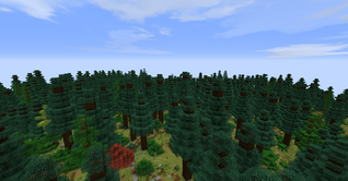 Dense Spruce Forest
