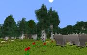 DorwinionBirchForest