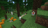 Chickens in the Shire B27