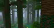 CloudForestUndergrowth