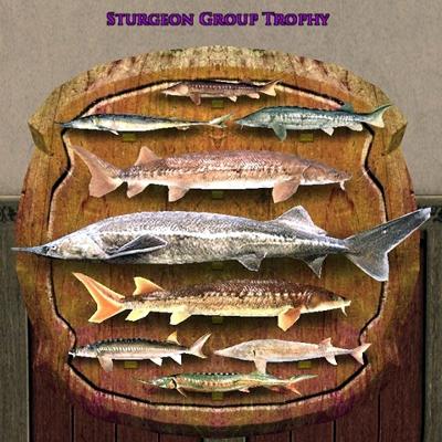 Sturgeon Group Trophy