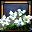 プリムローズ-icon