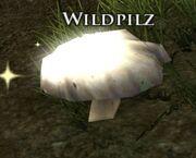 Wildpilz