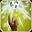 Bane Flare icon