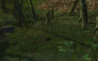Rushock Bog Clear