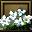 Primrose-icon