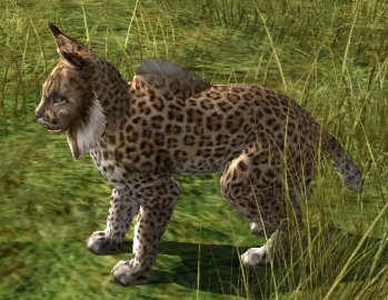 Spotted lynx
