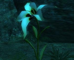 Rhosthon's Flower