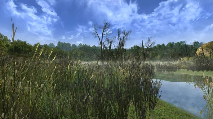 Binsenmoor