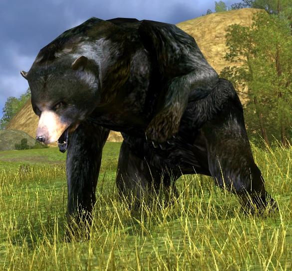 Mature Black-Bear