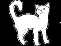 Длинношерстная кошка2