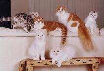 Кошки участников