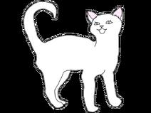 Короткошерстная кошка2