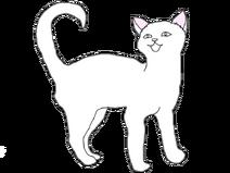 Короткошерстный кот2