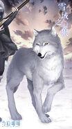 Snow Wolf close up 2
